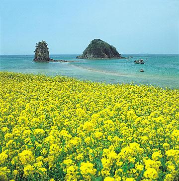 Hình bài viết Kỳ thú đảo Jeju